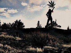 mucbook ca.legalisierung