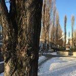 Mein Freund der Baum… – weil München nicht so grün ist wie du denkst