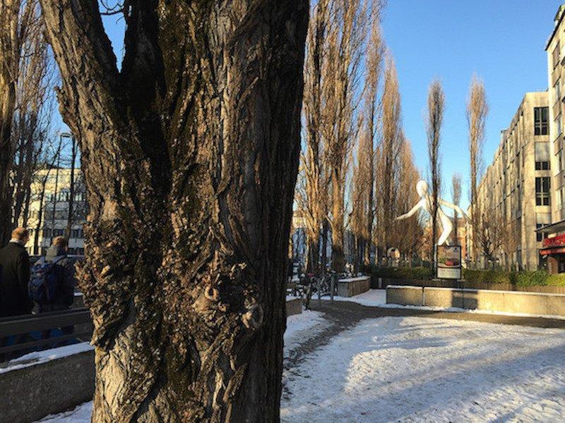 Baum Muenchen