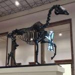 """Nicht erschrecken: Hans Haackes """"GIFT HORSE"""" im Münchner Haus der Kunst"""