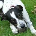Sonntag, 20 Uhr: Hundetrainer bei mucbook-radio
