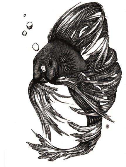 Corinna Naumann_Kampffisch_Tuschezeichnung