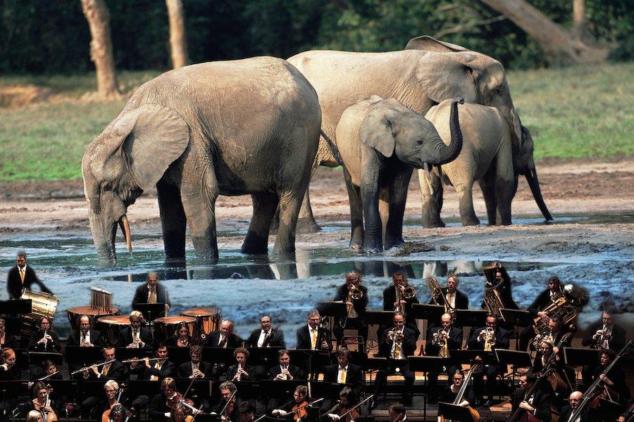 planet-erde-elefant-orchester-foto-martyn-colbeck-07