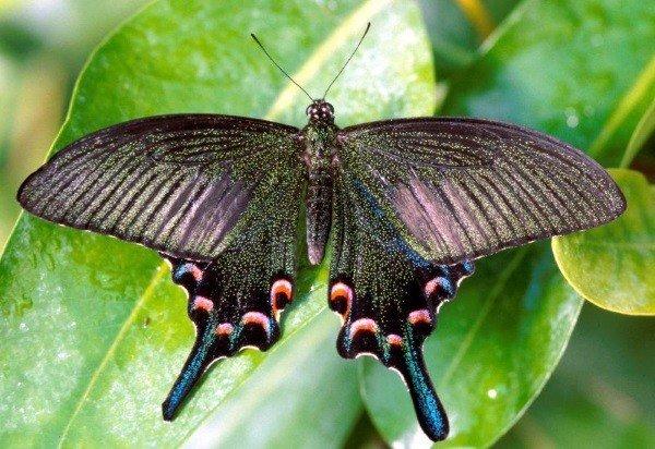 Tropische Schmetterlinge im Botanischen Garten München-Nymphenburg