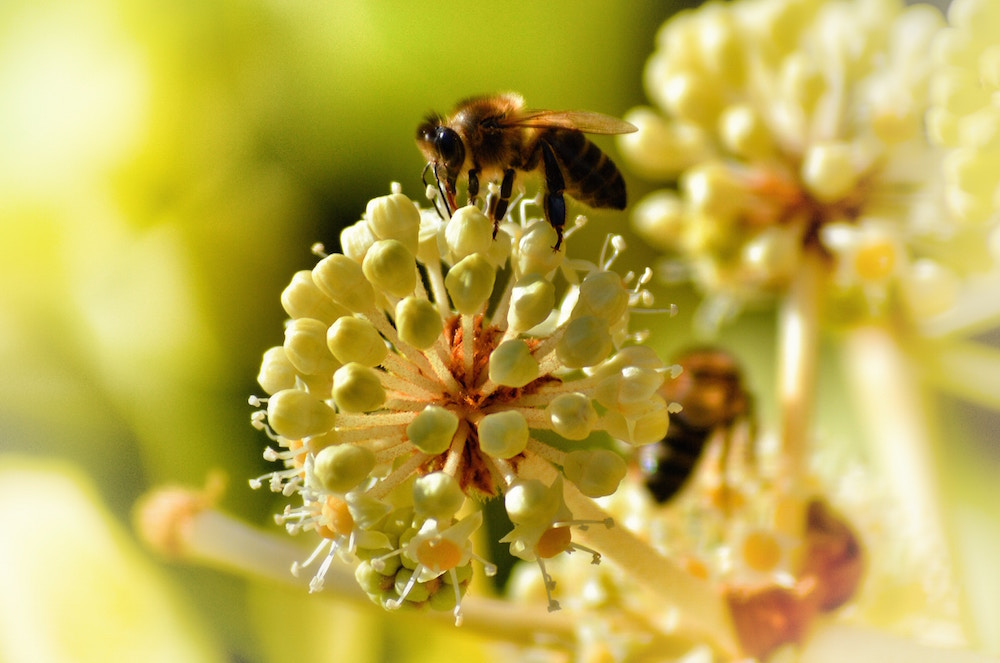 Bienen Volksbegehren: Rettet Die Bienen! Warum Du Jetzt Beim Volksbegehren