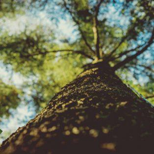 Einmal wässern, bitte: Helft den Bäumen unserer Stadt!