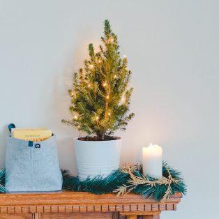 Wie wäre es mal mit einem nachhaltigen Weihnachtsbaum?
