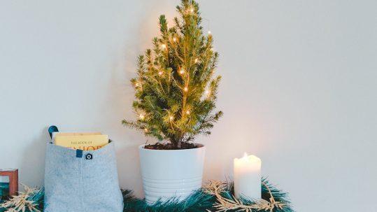 nachhaltiger weihnachtsbaum muenchen