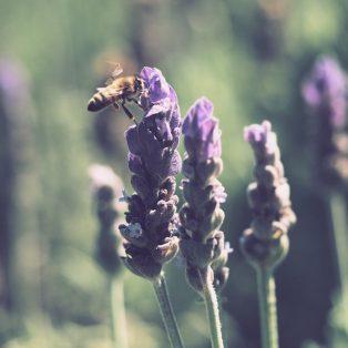 Honig-LiebhaberIn aufgepasst! Unterschreibe ab dem 31. Januar das Volksbegehren Artenvielfalt