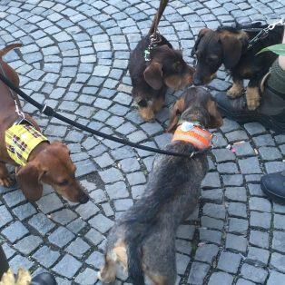 Vom Deutschen Museum zum Isartor: Das war die Dackelparade in München