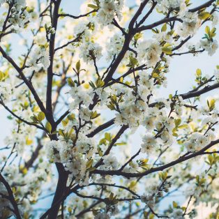 Die Mucbook Monatstipps für den Mai