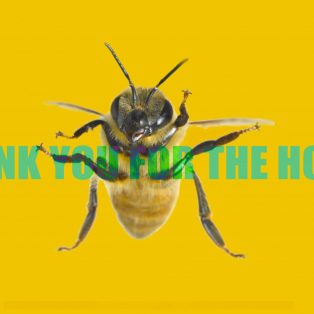 """Bienenkino als Danksagung? Wouter Wirths """"Thank you for the Honey!"""""""