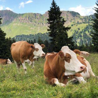 Gewinne mit  der Molkerei Berchtesgadener Land einen Kochkurs bei Spitzenkoch Florian Lechner