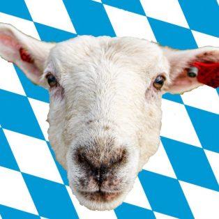 How to Schafkopfn, oder wie uns die CSU wieder zu echten Bayern machen will