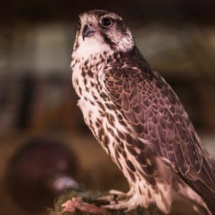 Vogelbeobachtung mal anders