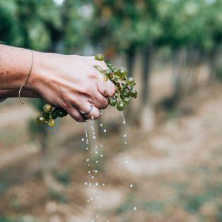 Weinfans aufgemerkt! Culinarium Bavaricum bringt dir das Weinviertel DAC nach Hause