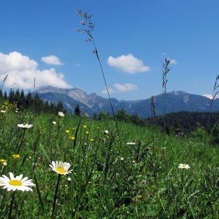 München deine Berge – Klein aber oho! Frühlingswanderungen in den Münchner Hausbergen
