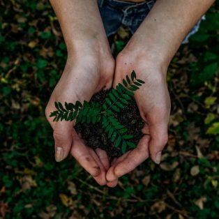 MUCBOOK bäumt auf: Pflanze mit uns Bäume zur Earth Week
