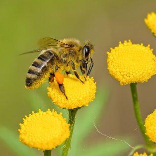 """Ein globales Thema regional und klimaneutral produzieren – Crowdfunding für Filmprojekt """"Ein Himmel voller Bienen"""" startet"""